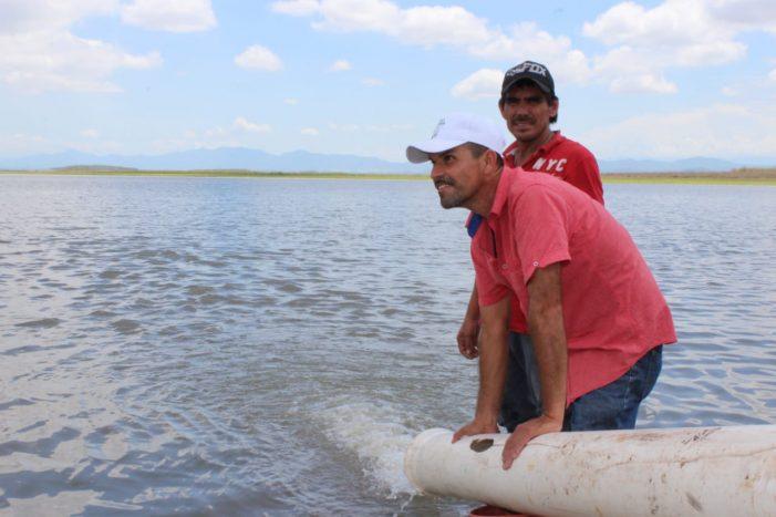 Sinaloa | Millón de crías de tilapia para la presa Eustaquio Buelna