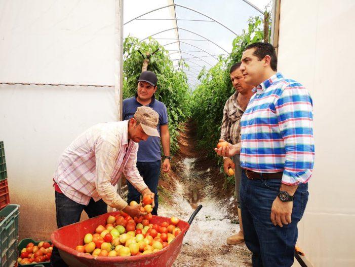 Sinaloa | Buscan exportar tomate y chile a Nueva York
