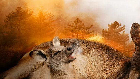 Los incendios de Australia visto de la cabina de un avión de rescate