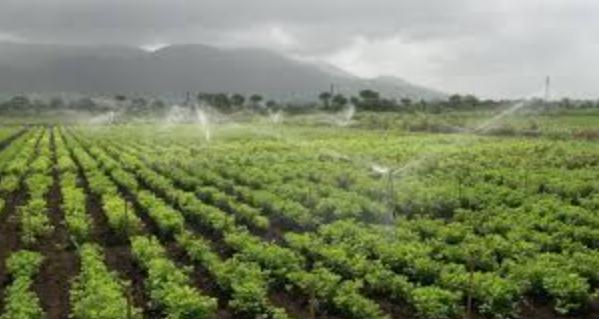 Irrigación como parte básica de los cultivos